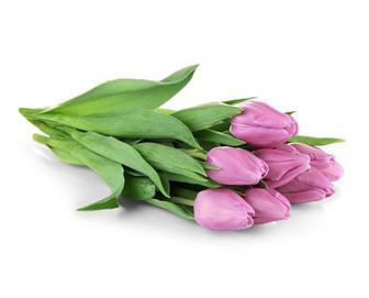 Тюльпан, зріз., 7 шт.